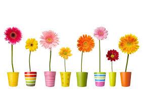 Concours Maisons et/ou balcons fleuris